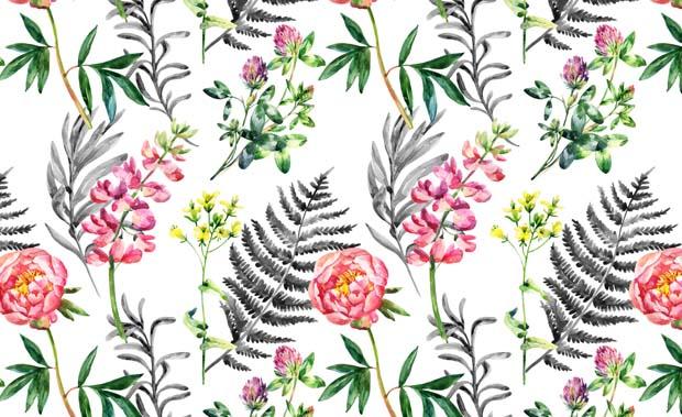 Catálogo Botanica II